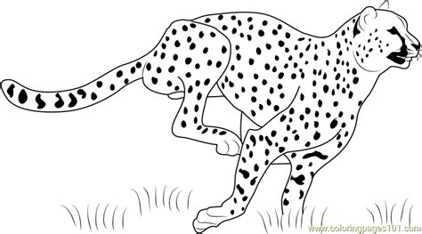Cheetah Kleurplaat by 51 Cheetah Print Coloring Pages Cheetah Coloring Pages