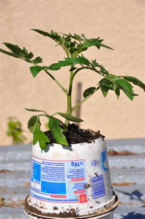 planter en pot planter des tomates en pots jardiner avec jean paul
