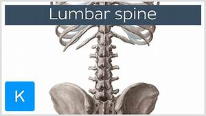 Lumbar Spine Anatomy And Function