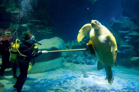 the sea aquarium worlds largest aquarium est facts