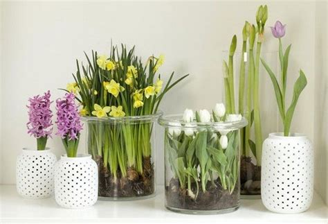 Flowering House Plants For Windows by Easy Flowers To Grow Indoors A Useful Guide For Indoor