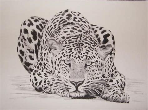 african animals drawings