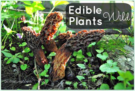 edible wild plants mushrooms survival walk edibles eat minnesota side taking natural diynatural food books take found skill woods articles