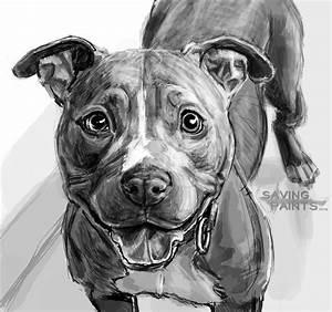 Sketch Pitbull 0418162 by saving-paints on DeviantArt