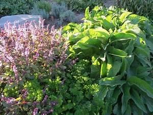 Kräuter Im Garten : kr uter ernten und schneiden so geht es garten pflanzen ~ Frokenaadalensverden.com Haus und Dekorationen