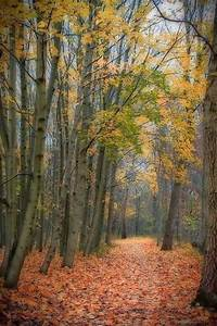 Forest, Path, In, Autumn