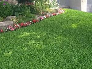 Are weeds really bad for one's lawn?