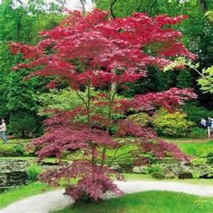 ornamental trees and shrubs with reddish purple foliage gardening forums