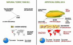 Infographic  The Drastic Evolution Of Fruits And