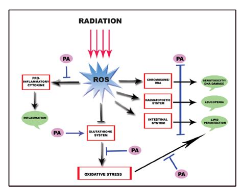 The Effect Of Gamma Radiation On Biological System