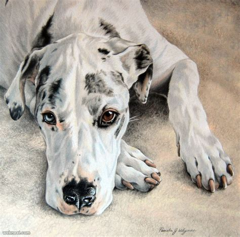 dog colored pencil drawing  lightcircleart