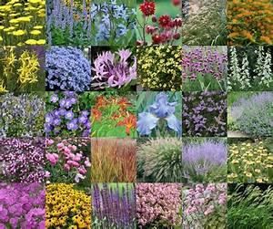 Parterre De Plante : 30 plantes vivaces pour un parterre sec et ensoleill ~ Melissatoandfro.com Idées de Décoration