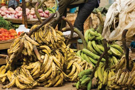 jeux de cuisine à télécharger gratuitement cameroun guide touristique petit futé cuisine locale