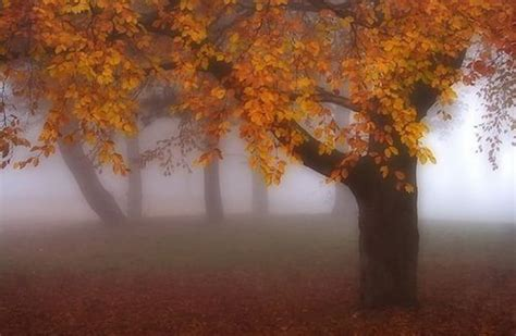 foggy autumn pictures   images  facebook