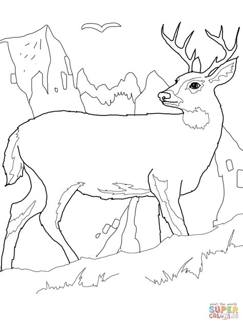 white tail deer coloring page  printable coloring pages