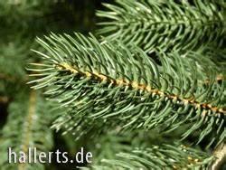Künstlicher Tannenbaum Wie Echt : k nstliche weihnachtsb ume kaufen bei eurogreens ~ Eleganceandgraceweddings.com Haus und Dekorationen