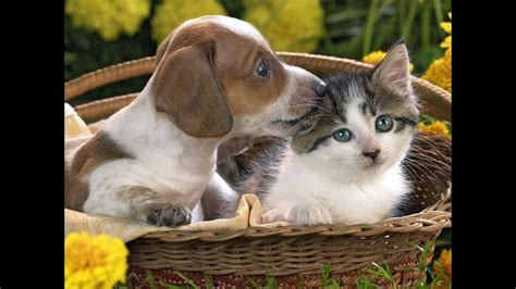 cats dogs cute adorable