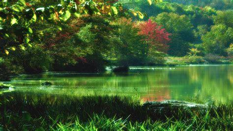amazing fresh landscape high definition quality full hd