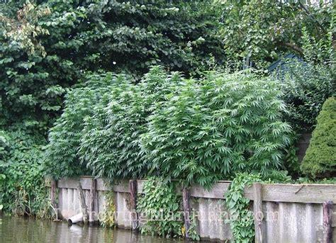 Best Soil Mixture For Outdoor Marijuana Plants