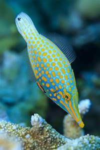 Coral reef fish | Earth Blog