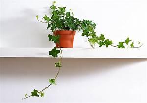 Plantes Pour Chambre : plante pour chambre liste ooreka ~ Melissatoandfro.com Idées de Décoration