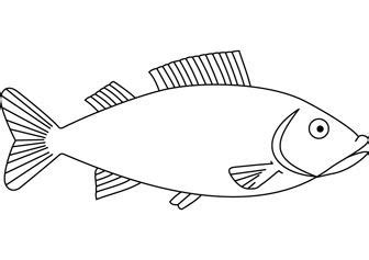 fish drawings images basic easy fish drawing fish