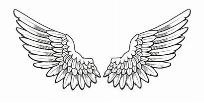 Wings Angel Drawing Transparent Drawings Sketches Angels