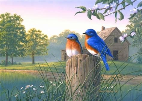 Morning Animal Wallpaper - morning bluebirds birds animals background wallpapers