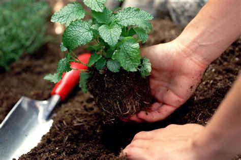 improving  soil   small farm