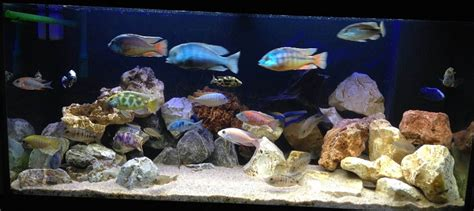 bulleur aquarium 20 litres 28 images 20 litre setup tropical fish forums s 252 damerika