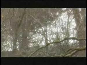 "The ""Royal"" 7x7 Elk - YouTube"