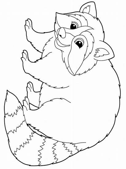 Raccoon Coloring Pages Animal Animals Colors Recommended