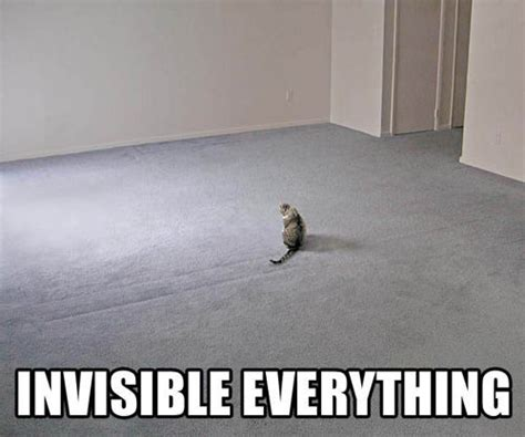 Invisible Cat Memes - invisible bike know your meme