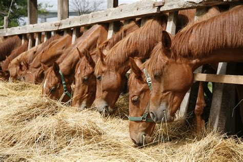 horse food things feed know before pet paste calming eating wisconsin