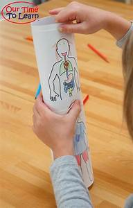 94 Best Preschool  Human Anatomy  U0026 Physiology Images On