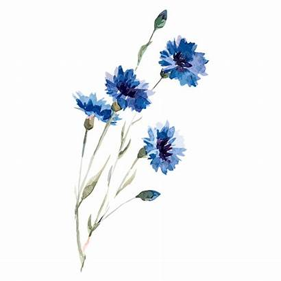 Flowers Watercolor Flower Plant Drawing Painting Floral
