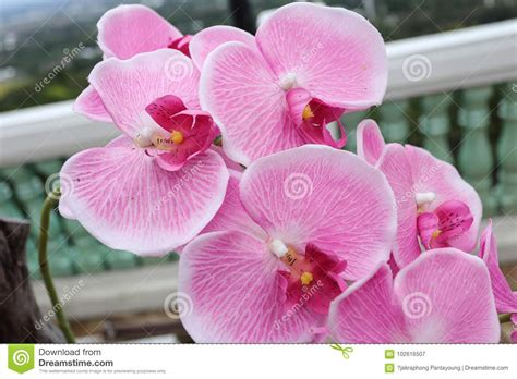 Orchid Flower In Thailand Stock Image