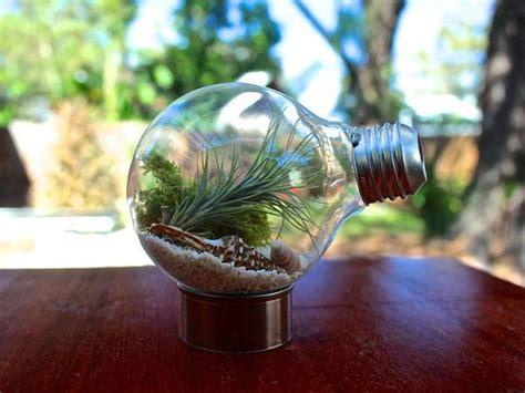 amazing air plant display ideas gardening viral