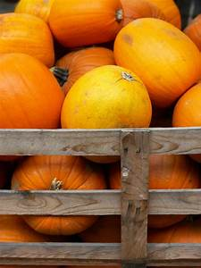 How To Harvest Pumpkins And Store The Seeds
