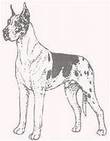 Dane Coloring Greatdane Puppy Pa Dogs Template Danes Anime 2f sketch template