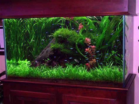 unique aquarium decor decor ideasdecor ideas