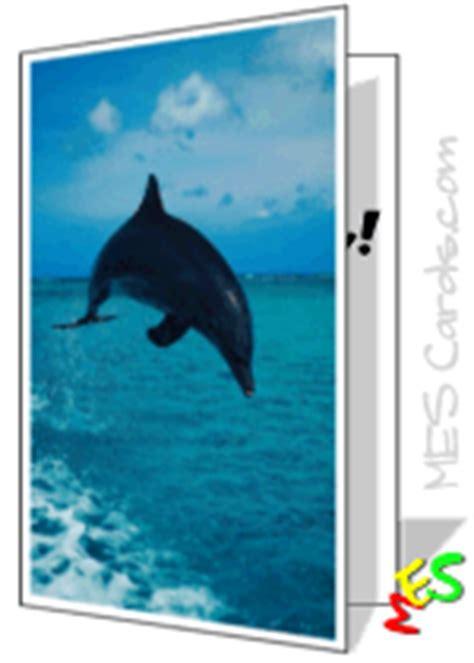 greeting card maker bottlenose dolphin  cards  print