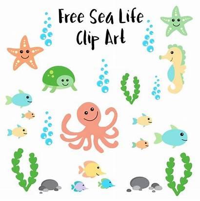 Clip Sea Creatures Underwater