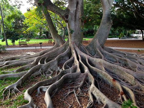 sarasota botanical gardens selby botanical gardens florida hikes