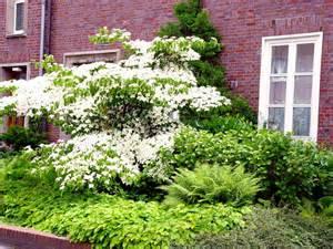 Bäume Vorgarten Nordseite bäume vorgarten nordseite vorgarten gestalten nordseite
