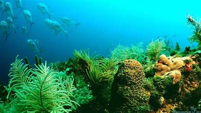 Ocean Marine Wallpapers Backgrounds Wallpapersafari Wallpaperaccess Code