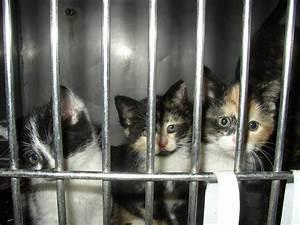 Turned Away: A Closer Look at 'No-Kill' Animal Shelters | PETA
