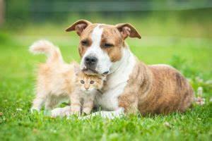Vermieter Verbietet Hund : hundehaltung in der mietwohnung tierschutz tierhaltung ~ Lizthompson.info Haus und Dekorationen