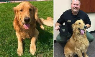 Family Who Thought Their Golden Retriever Had Found A Time