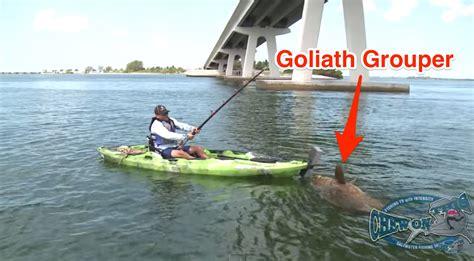 grouper goliath kayak saltstrong landed